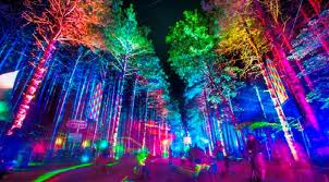 Electric Forest Lights