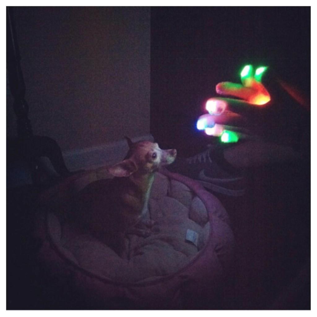 Lightshow Dog