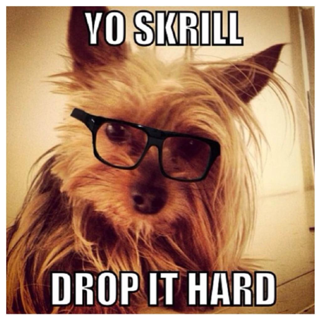 Skrillex Dog