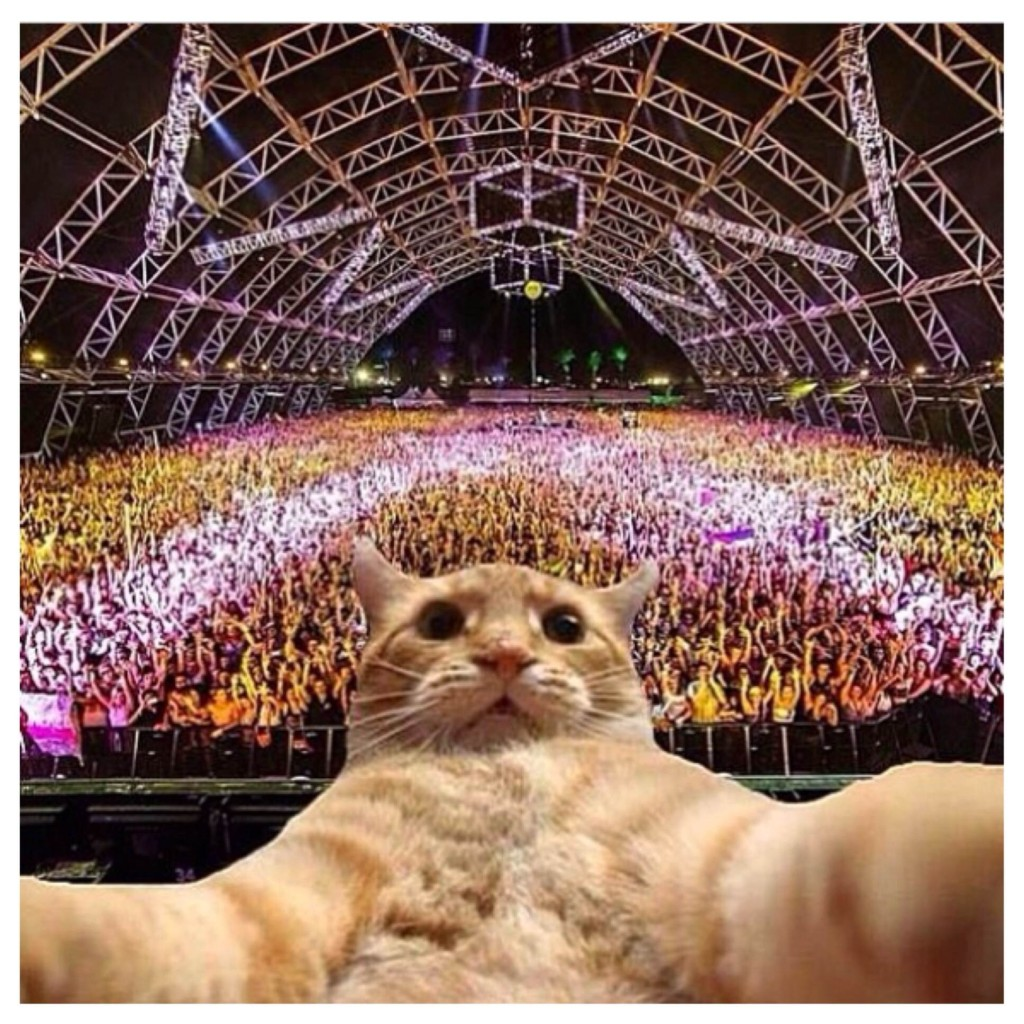 EDM Selfie Cat