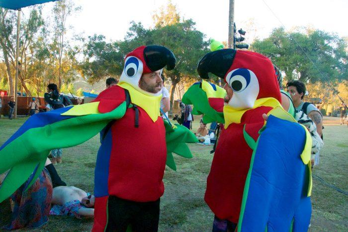 Parrots part of Sarfari Saturday at Woogie