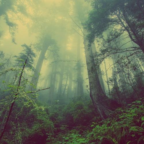 CharlestheFirst 'Through the Mist'
